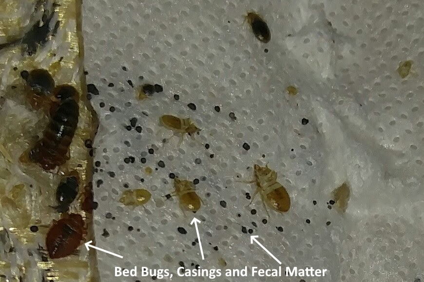 Bed Bug Faq S 813 922 8475
