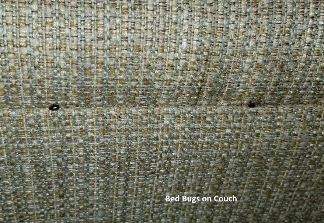 Bed Bug Frequently Asked Questions Fl Bed Bug Experts