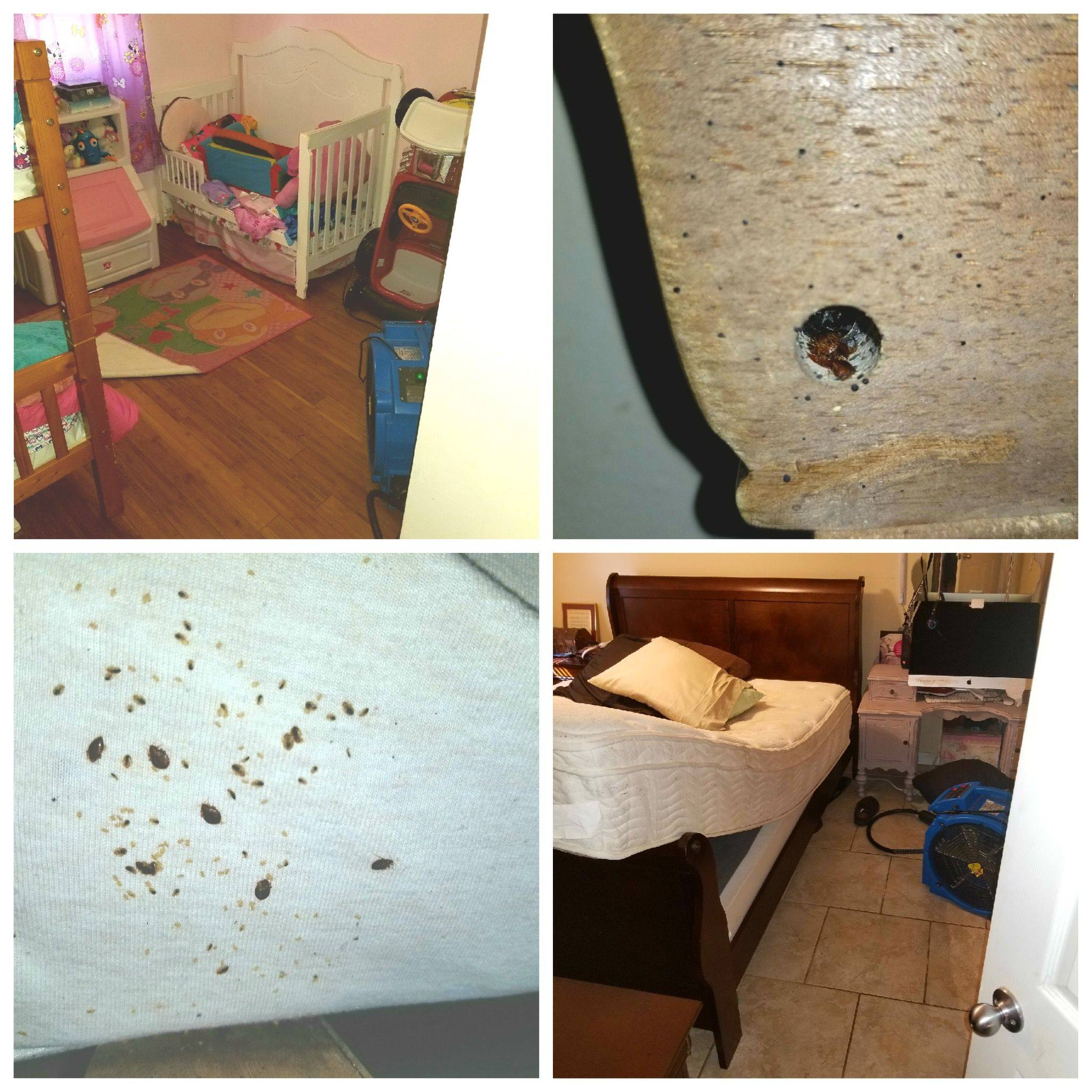 Florida Bed Bug Control